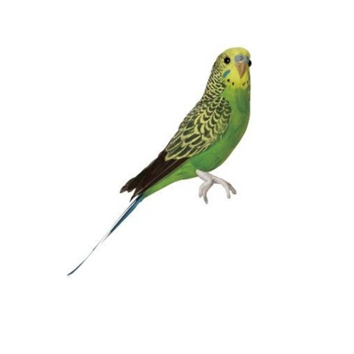 Budgie / green